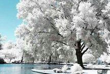 winter wonderland / by Kathleen Craft Loftus