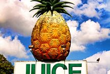 Pineapple Paradise / I'm obsessed with pineapples. Help! You may also like my site http://www.TheHawaiianHome.com