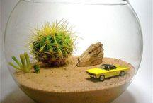 cactus detalii
