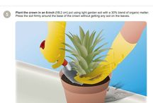 how to: grow a pineapple tree