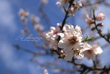 Blossoms Time / Blossoms