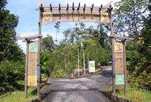 Orangutans in Malaysia (Semenggoh) / Our visit to the Semenggoh Orangutan Rehabilitation Centre.