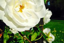 Errol Park Gardens Produce / The beautiful natural produce of the wonderfully fertile gardens