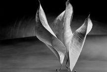 Thomas Bernsten / 4 x 5 Photography and Digital Archival Prints