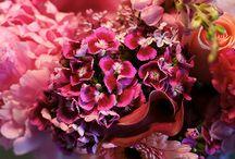 Flowers / by Kayla Marie