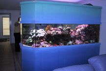 Awesome Aquariums (fish tanks) / by Y'NaDesigns