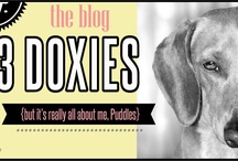 Dog Blogs We Love / by KC Porter