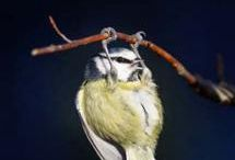 Birds / by Eileen Lau