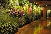 Vertical Garden Design - DPI New York