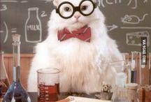Chemistry (Puns)