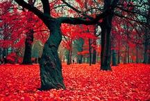 Autumn / #Autumn #color #colors #nature