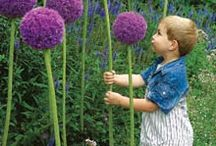 Gardens and Flowers / Jehovah's spectacular array of glorious gardens! / by Donna Laffoon