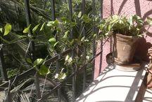 Home Gardenning