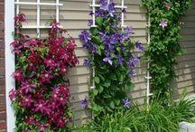 Květiny k našemu bungalovu
