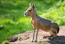 Patagonia Animals
