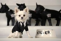 Dogs in clothes | Canine Couture / Dogs with fashion! Cute dogs dressed up in designer wear! Because we all love a cute dog!