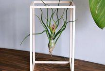 botánica moderna