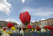 Pamplona: A photo travel guide / The most up-to-date collection of sights, bars, nightclubs, museums and events for this great travel destination. Follow us and we will follow you back and also invite you to contribute your own fantastic pins to this living pinboard.