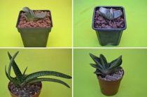 We love cactus / Packs con descuentos especiales de diferentes especies y niveles... en tu tienda online de cactus y suculentas favorita!