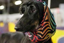 Contestants Of America's Biggest Dog Show