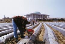 2005년 영등포 관광사진공모전 / 제10회 영등포 관광사진공모전