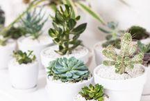 Plants / Growing, propagating....