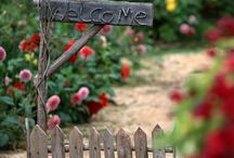 In My Garden....
