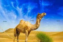 Blog Posts / by Fotolia