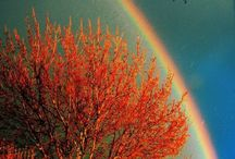 rainbows / by Melissa Rasley