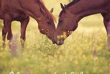 Horses/Caballos / Love and Inspiration