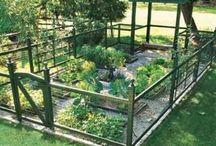 Gardening / Gardening ideas including organic.
