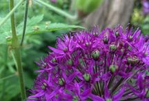 Bloemen en planten - Flowers / Bloemen en planten in door Greenthree aangelegde tuinen. Bekijk dit bord voor ideeën!