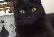 Les jolis p'tits chats noirs.....