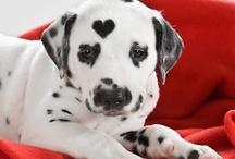 különleges kutyák
