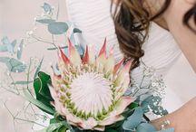 bouquet / by Jessica Hamilton