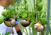 Plantes_jardinage