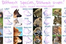 Reference animals