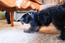 Productos Ortopédicos para Perros / 0