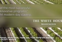 Farmworkers Rights / While we focus on protecting the rights of farmworkers worldwide, we care deeply about the plight of imigrant farmworkers right here in America.