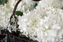 Flowers / by Tamerlyne Cooper