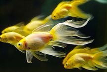 Lovely Range of Aquariums