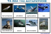Ζώα Ανταρκτικής