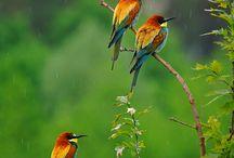 Animals / Söta djur mest fåglar