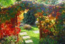 Ogrody / Aranżacja ogrodów, terenów zielonych, parków.