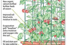 Tomatoes / Self watering