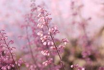 Blomsterfoton