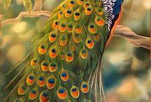 tavus kuşu tablo