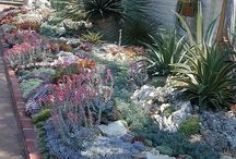 Garden | Succulents / by Kelly Lemmons