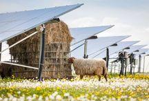 panneau photovoltaique au sol ferme solaire champs