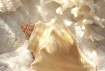 Belas e coloridas conchas... / by Lelia Sarda